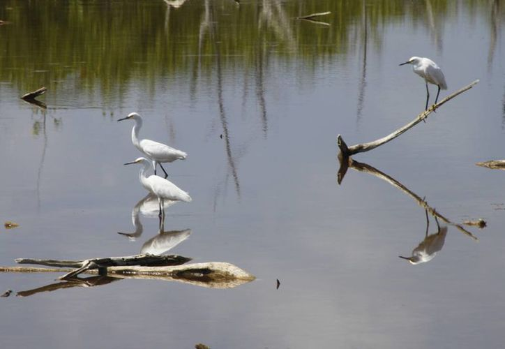 Sian Ka'an mantiene características ambientales. (Sergio Orozco/SIPSE)