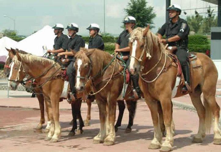 Imagen de la policía montada de Chihuahua. Foto de contexto.(municipiochihuahua.gob.mx)