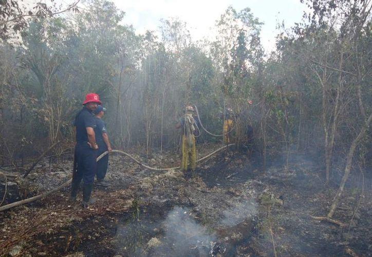 """En Benito Juárez se combate del incendio en """"Los Cocos"""", en el kilómetro 228 de la carretera federal Cancún-Mérida. (Licety Díaz/SIPSE)"""