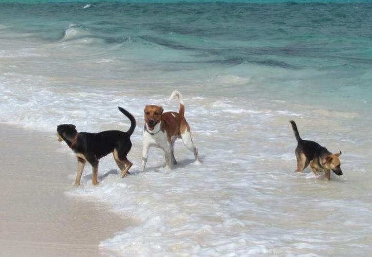 La Zofemat desde el 2016, se dio a la tarea de colocar letreros con advertencias para los dueños de perros. (Archivo/SIPSE)