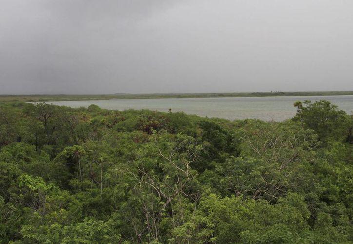 La sobreexplotación de sus recursos pone en peligro a la biodiversidad de la zona. (Tomás Álvarez/SIPSE)