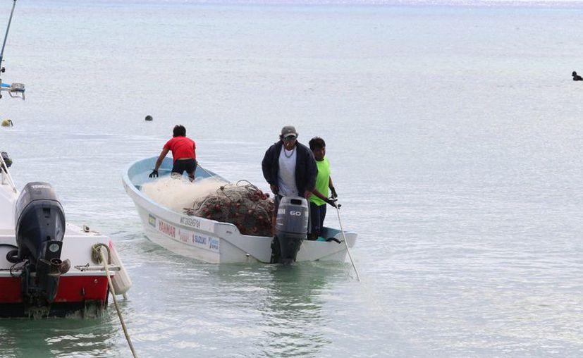 Los cooperativados reportan buena temporada de pesca a pesar de las lluvias que se registran. (Adrián Barreto/SIPSE)