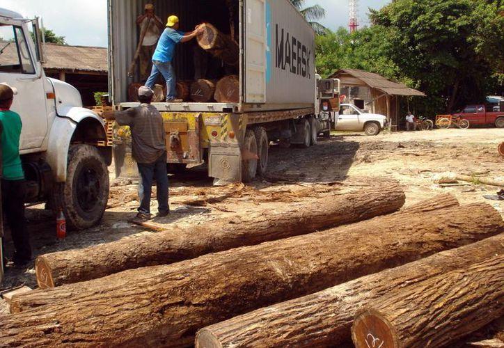 La industria maderera en Yucatán atraviesa por una etapa crítica. Imagen de contexto. (Milenio Novedades)