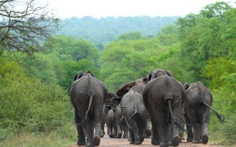Hombre muere aplastado por elefante mientras intentaba tomarse una selfie