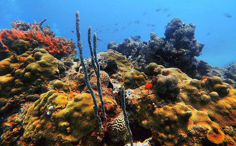 Buque encallado daño severamente un arrecife frente a Tuxpan