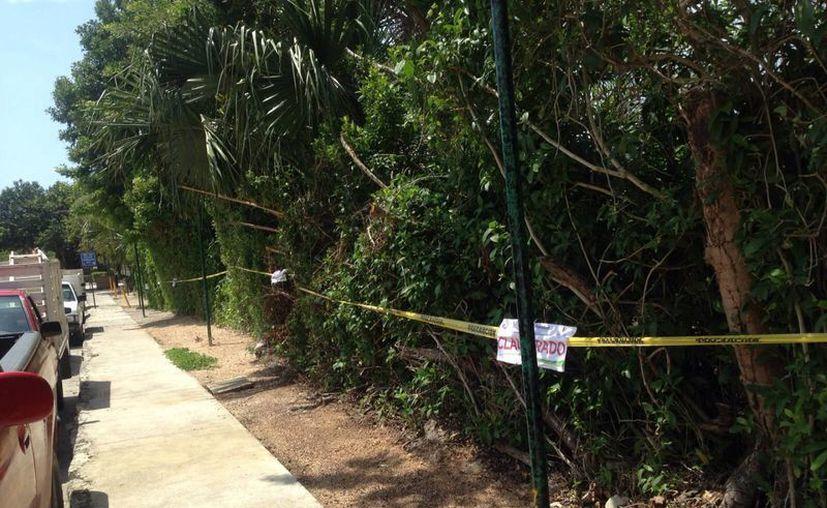 El Ayuntamiento colocó 10 sellos de clausura en un predio cercano al hotel CaTalonia Yucatán. (Redacción/SIPSE)