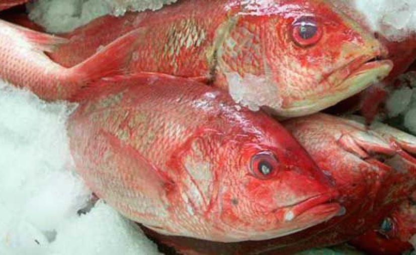 La Cuaresma inició el 1 de marzo y concluye el 13 de abril, por lo que esperan que incremente la venta de mariscos y pescados. (Contexto/Internet)