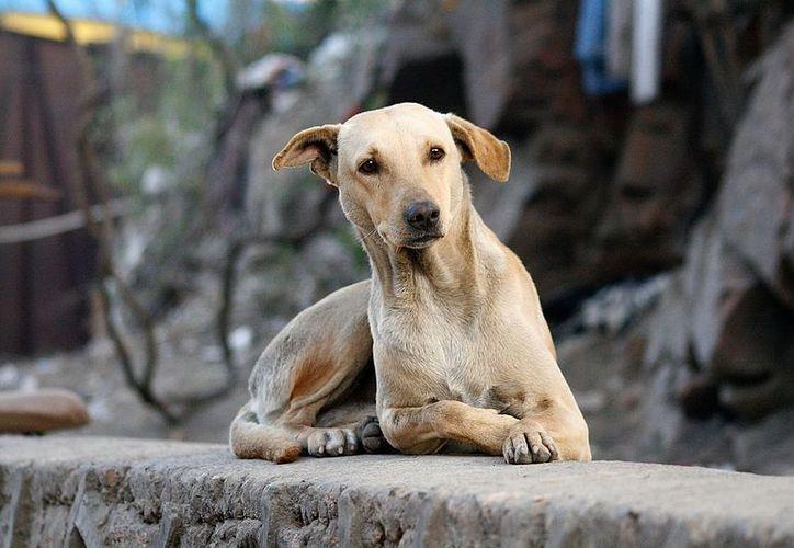 Siguen apareciendo animales muertos, con huellas de tortura y degollados en el Estado de México. (Foto: Club Mascotas)