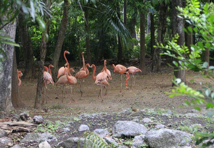 Los domingos se implementa el programa para alimentar peces y guacamayas en el zoológico. (Harold Alcocer/SIPSE)