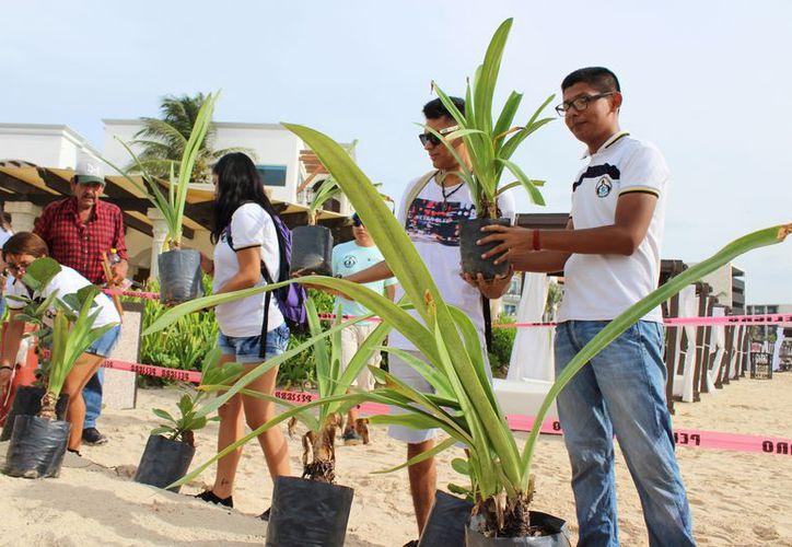 Las dunas que se han generado gracias a la reforestación costera resistieron el embate de las lluvias pasadas. (Adrián Barreto/SIPSE).