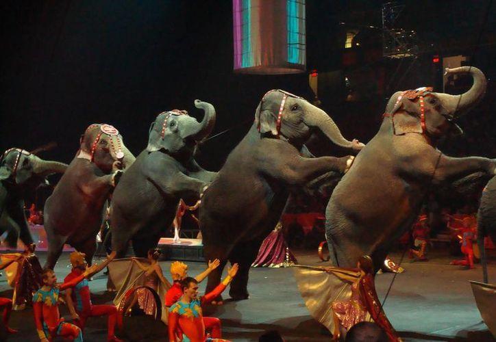 Consideran importante la denuncia ciudadana para poder detectar los circos y/o lugares donde se maltrata a los animales. (revistamundoverde.net)