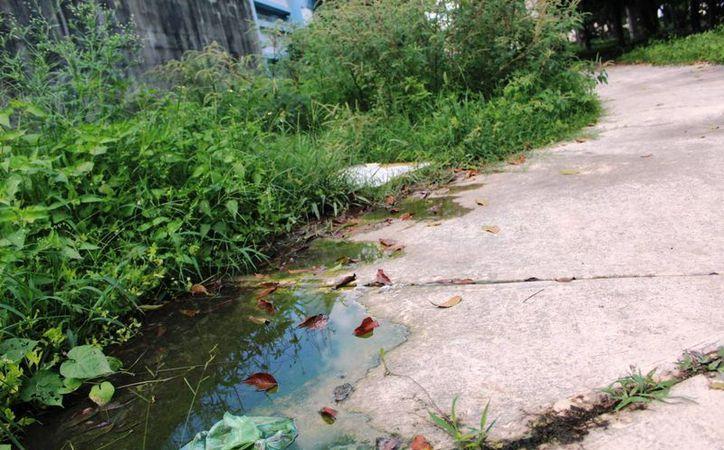 Las aguas negras que rebosan de una coladera desde la semana pasada, afectan a vecinos del fraccionamiento Bosque Real, en Playa del Carmen. (Octavio Martínez/SIPSE)