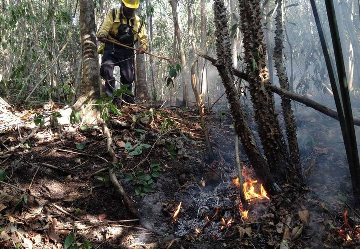 Los brigadistas lograron controlar la parte sur del incendio cercano a Villas del Sol. (Adrián Barreto/SIPSE)