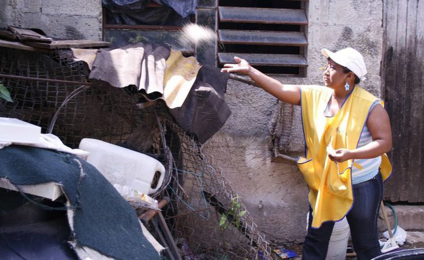 Tan solo en Quintana Roo, alrededor de 240 predios fueron bloqueados con cercos epidemiológicos, evitando la gestación de larvas. (Archivo/SIPSE)