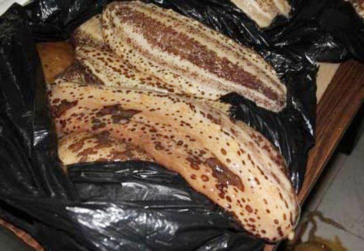 El pepino de mar se encontraba en bolsas negras. (Milenio Novedades)