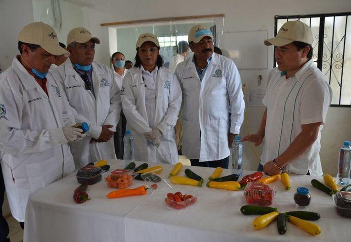 El proyecto de producción de semilla, se basa en la innovación tecnológica agropecuaria. (Foto: Juan Rodríguez)