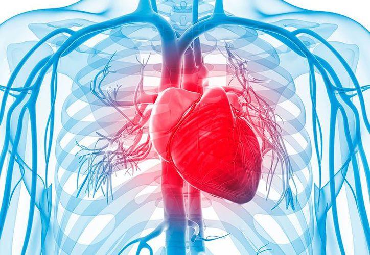 No llevar una dieta saludable, no hacer actividad física y consumir sustancias tóxicas llevan más rápido a adquirir alguna enfermedad cardiovascular. (Salut a prop).