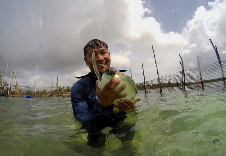 La tortuga marina anida a lo largo de varios kilómetros de zona costera de Mahahual, de norte a sur. (Joel Zamora/SIPSE)
