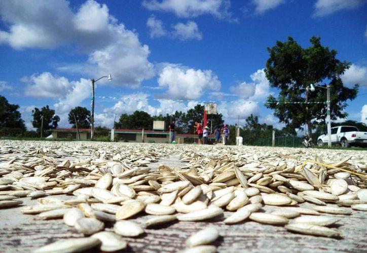 Se han logrado contabilizar mil 600 productores interesados en la extracción de aceite vegetal. (Edgardo Rodríguez/SIPSE)
