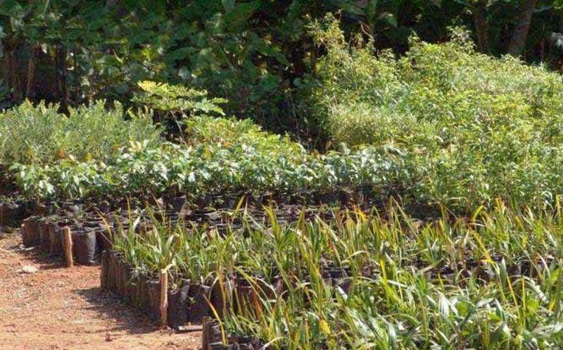 Embellecen la riviera maya con plantas nativas novedades for Vivero plantas nativas