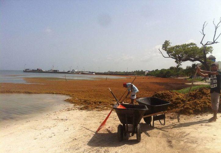 Al momento se ha contratado a más de 160 personas, hombres y mujeres para la limpieza de playas.  (Redacción/SIPSE)