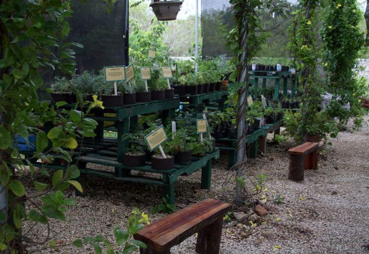 Las plantas orgánicas representan una opción para productores. (Milenio Novedades)