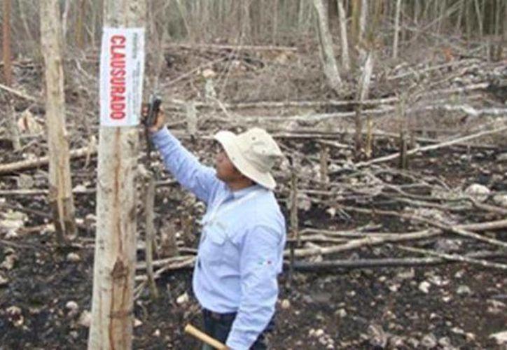 La Profepa colocó sellos de clausura temporal en un predio ejidal del municipio José María Morelos. (Cortesía)