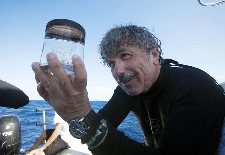 Investigadores de la Universidad de Florida estiman que existen hasta 20 millones de compuestos aún desconocidos en el mar. (EFE)
