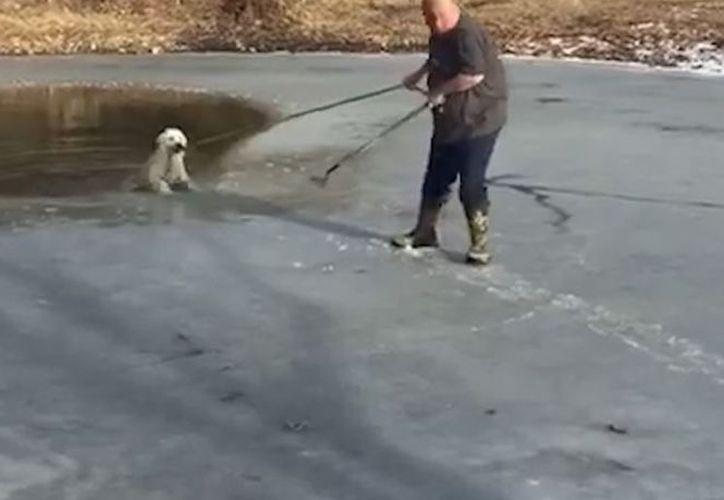 Un perro captó la orden que le daba un hombre al arrojar una soga para salvarlo de morir congelado. (Foto: Captura de video)