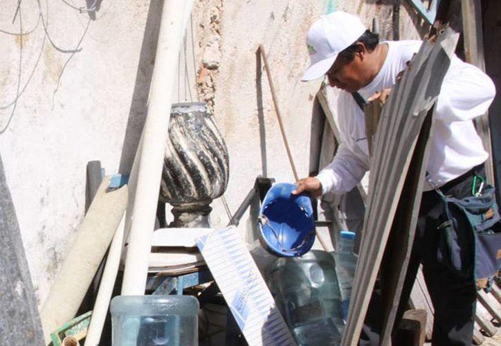 Especialistas de la Universidad Autónoma de Yucatán pidieron extremar medidas preventivas en los hogares para evitar la reproducción del mosco Aedes aegypti, transmisor del dengue, zika y chikungunya. (Archivo/Milenio Novedades)