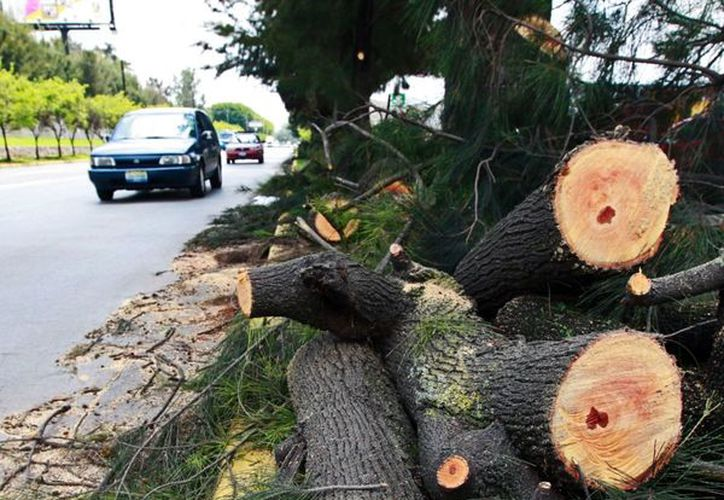 Al menos el 70% de la madera que se consume en el país es ilegal, denunció el Instituto de Investigaciones Sociales (IIS) de la UNAM. (Foto: El Informador)