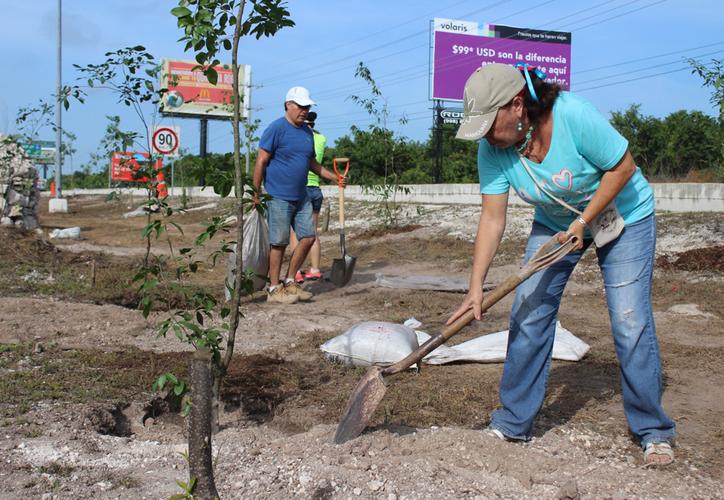 Repusieron 250 árboles de los 500 que fueron talados el pasado 11 de julio. (Adrián Barreto/SIPSE)