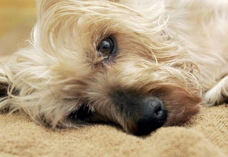 PetCo es una de las cadenas líderes de tiendas especializadas en alimentos, suministros y servicios integrales para mascotas. (Archivo/AP)