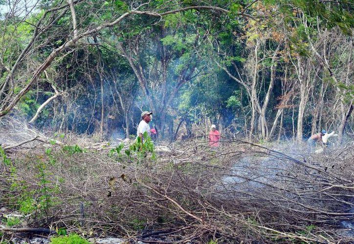 Los ejidatarios aun no comprueban cuales tierras son de su propiedad. Mientras tanto, invaden y devastan las tierras con quemas. (Milenio Novedades)