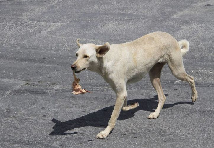 De 2006 a 2011, incrementó la adquisición de mascotas hasta en 40%. (Tomás Álvarez/SIPSE)