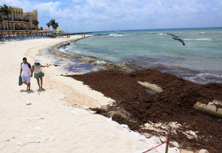 La playa de El Recodo de Playa del Carmen luce parcialmente invadida por el sargazo. (Octavio Martínez/SIPSE)