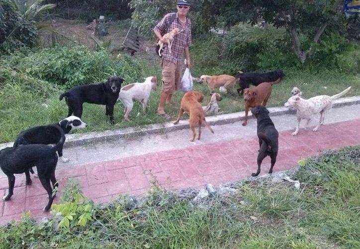 Gustavo Martínez Ramos, cuenta actualmente con 17 perros y cinco gatos, que recogió en la calle. (Javier Ortiz/SIPSE)