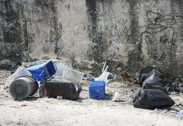 Vecinos aseguran que llegan en camionetas a dejar basura y escombro, sin que la autoridad detenga la situación. (Adrián Monroy/SIPSE)