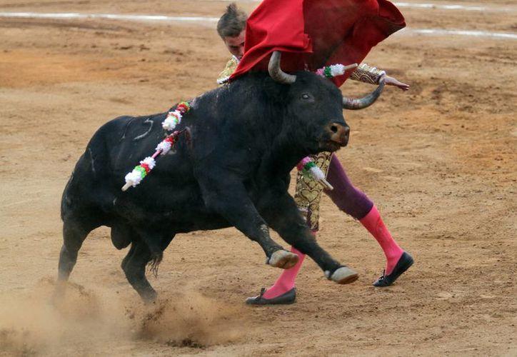 El legislador enfatizó que la tauromaquia es una mezcla de dos culturas. (Archivo/Notimex)