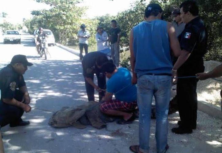 Fue necesaria la intervención de varias personas para someter al cocodrilo que caminaba por calles del puerto de Progreso. (Óscar Pérez/SIPSE)