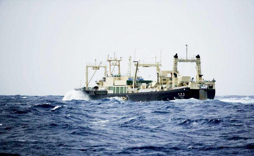 Una fotografía facilitada por Greepeace y realizada desde su barco 'Esperanza' muestra al ballenero del gobierno japonés Nisshin Maru en el santuario de ballenas del Océano del Sur. (EFE/Archivo)