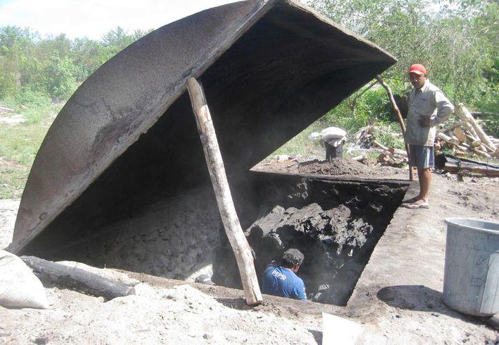 Las familias que habitan en el área rural, requieren alternativas de producción como el forestal. (Javier Ortiz/SIPSE)