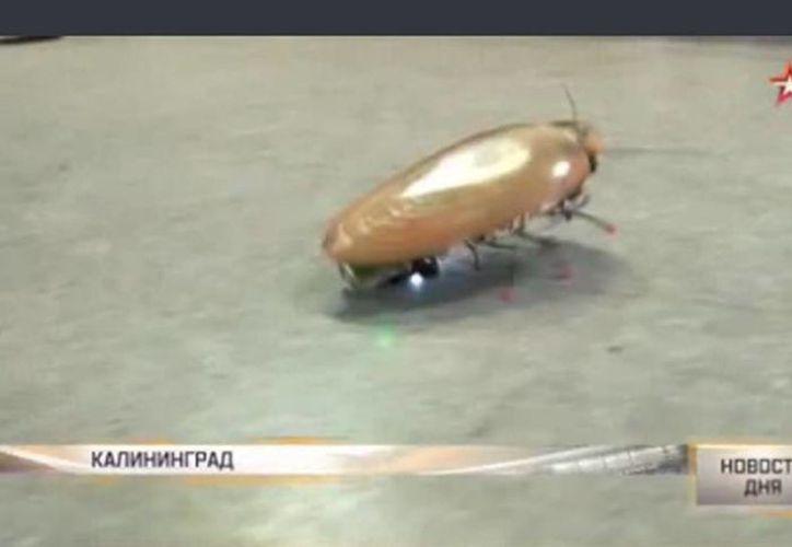 Captura de pantalla del video que muestra el robot-cucaracha creado por científicos rusos. (tvzvezda.ru)