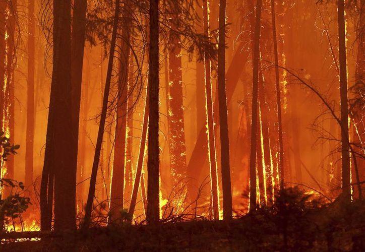 Las llamas calcinan los árboles mientras avanzan hacia el camping familiar de Toulumne en Berkeley en California. (EFE)
