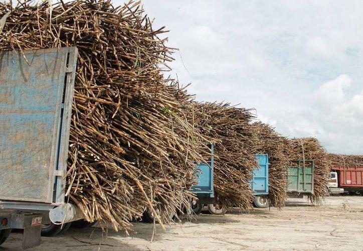 Los precios de la tonelada de azúcar y de caña se han desplomado en todo el país. (Edgardo Rodríguez/SIPSE)