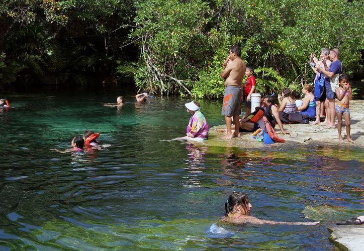 Los cenotes han sido de los principales cuerpos de agua para analizar la situación. (Gustavo Villegas/SIPSE)
