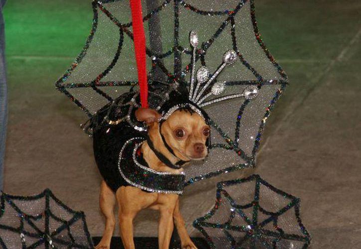 Los perritos conquistaron los corazones del jurado. (Redacción/SIPSE)