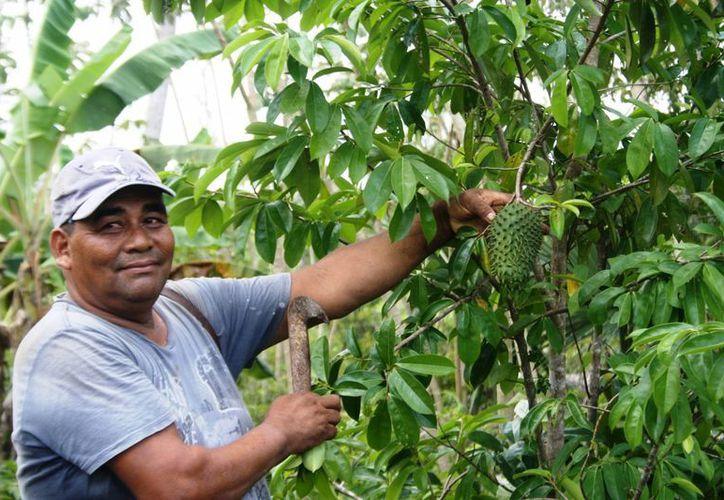 Alrededor de 25 productores de Solidaridad han frenado su producción ante la falta de compradores. (Octavio Martínez/SIPSE)