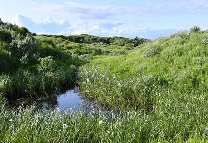 Los máximos de rendimiento de hierbas en estos lugares son más altos que en los lagos secos. (Foto: RT)