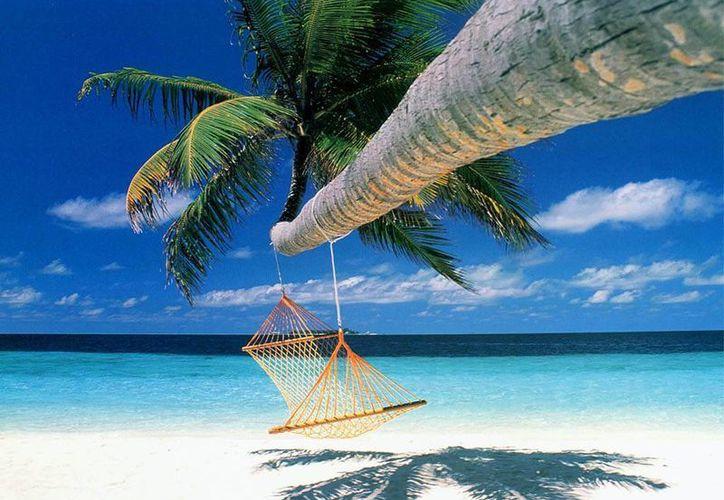 Para disfrutar de las vacaciones, busque seguridad y garantía de contar con un servicio de calidad. (Milenio Novedades)
